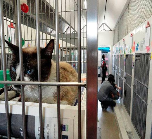 Doria não compra ração para pets e Donato pede explicação
